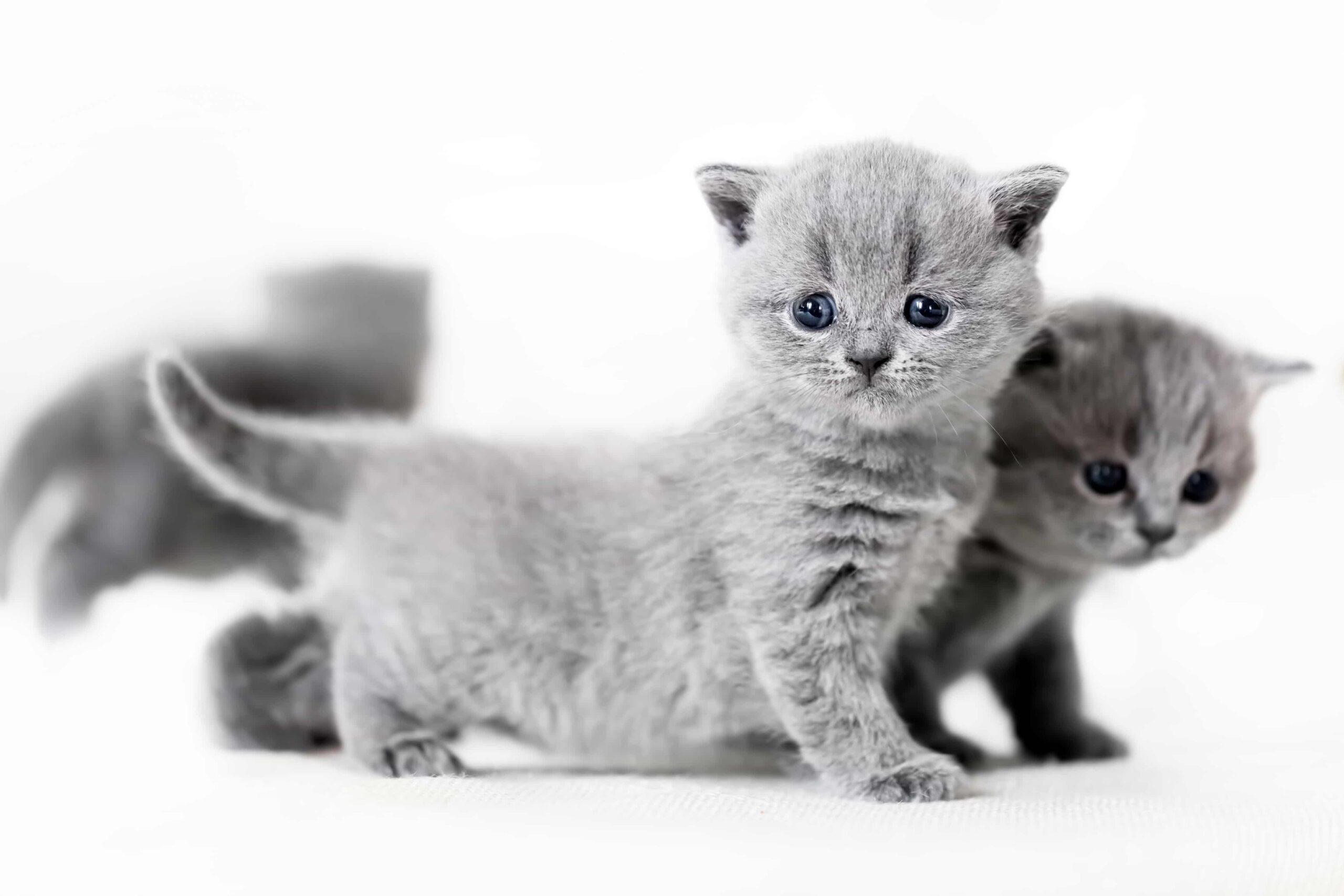 Yavru Kedim İshal Olursa Ne Yapmam Lazım?