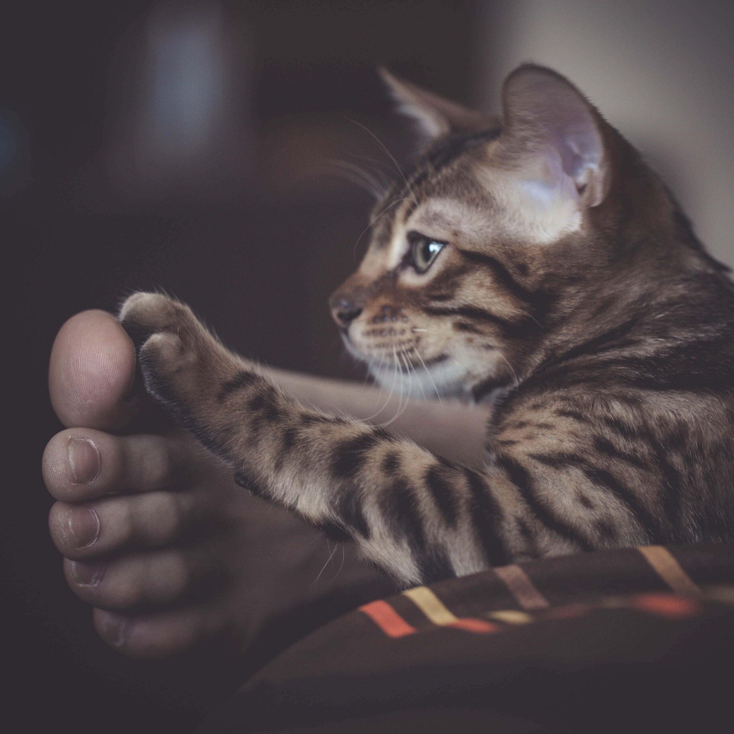 Kedim Topallıyor, Neden Olabilir?