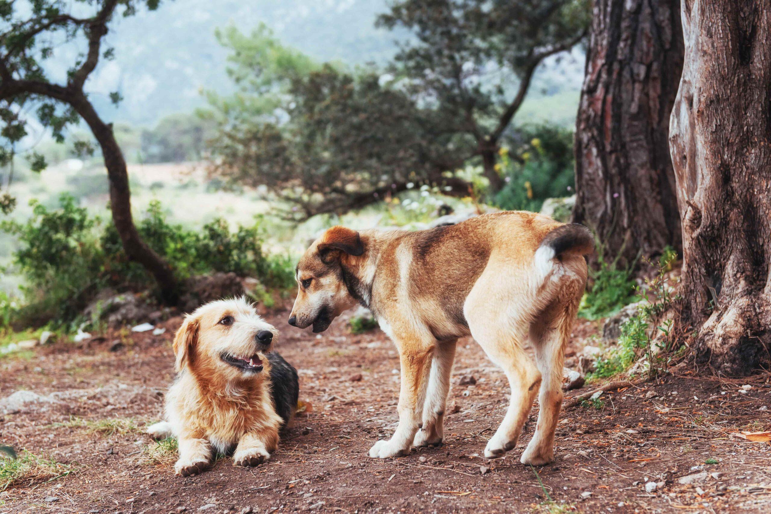 Köpekler Neden Birbirini Koklar?