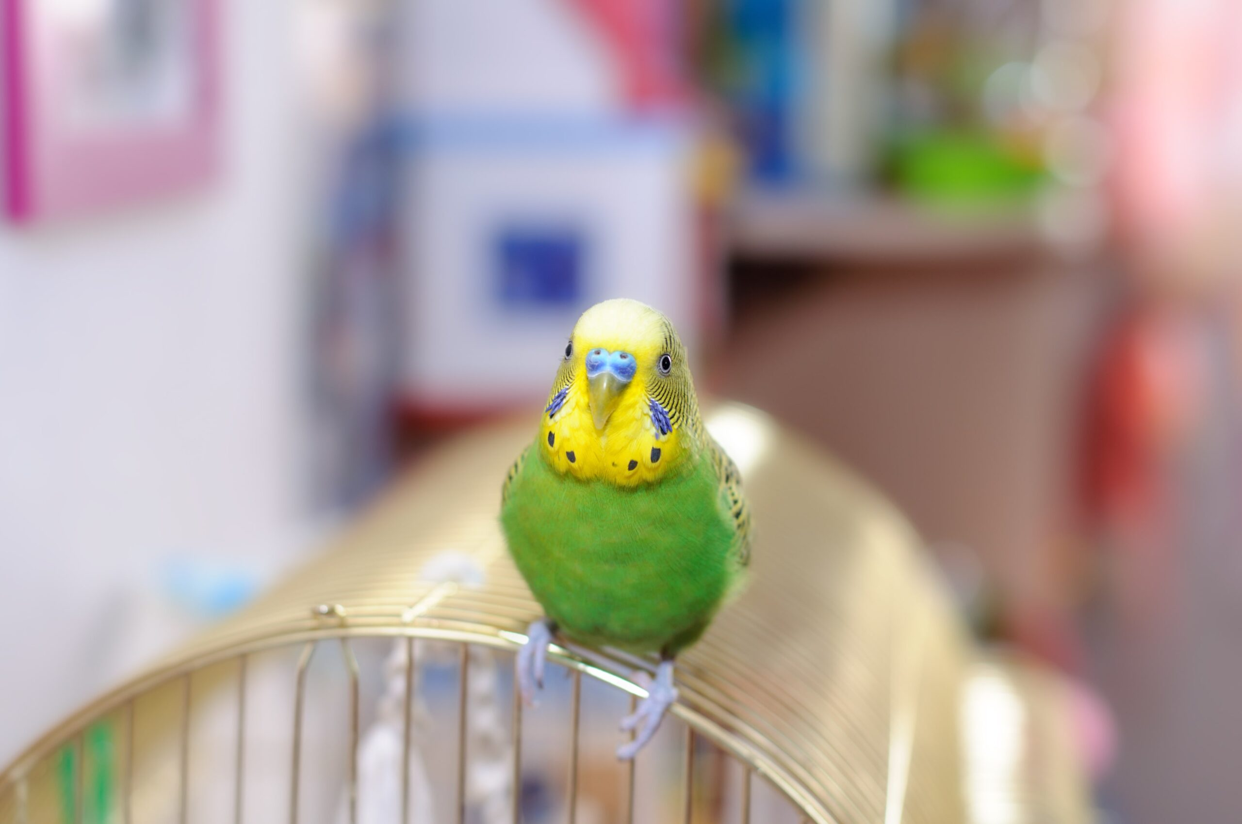 Muhabbet Kuşlarında Mantar Hastalığı Nedenleri, Belirtileri ve Tedavisi