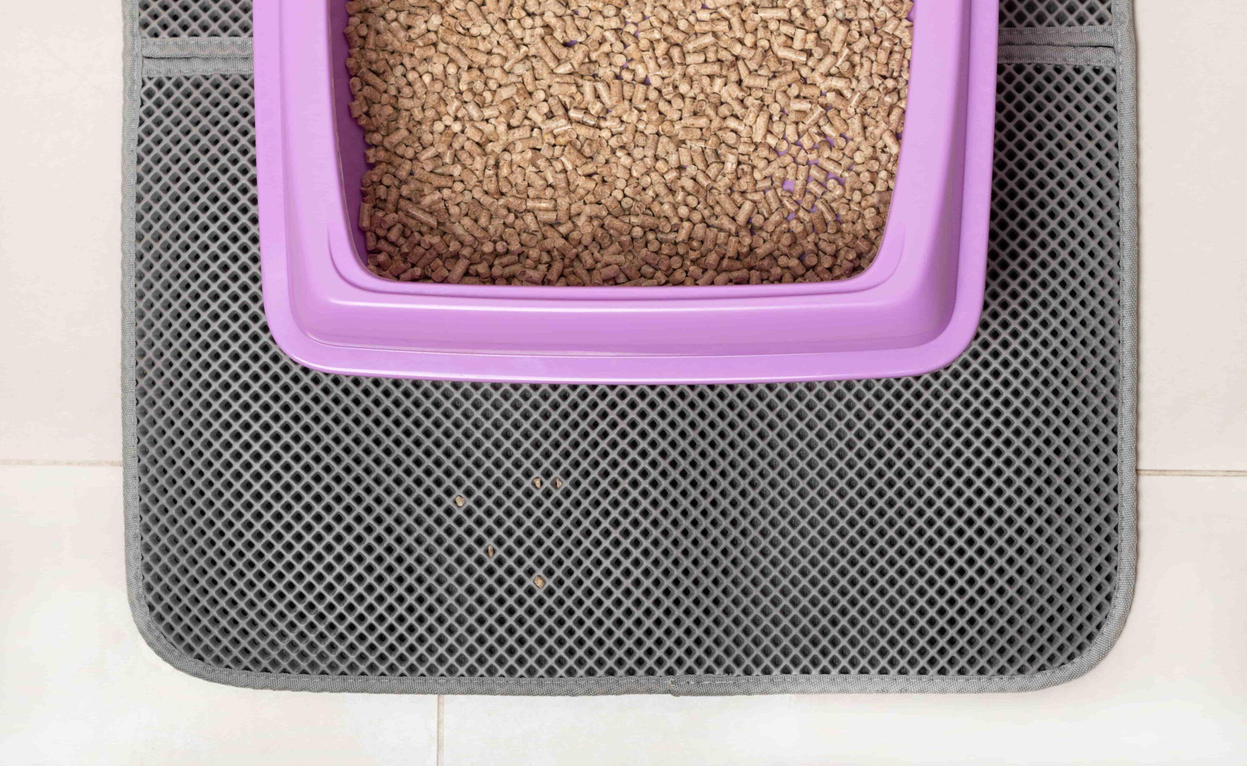 Kedi Tuvalet Paspası Nedir, Ne İşe Yarar?