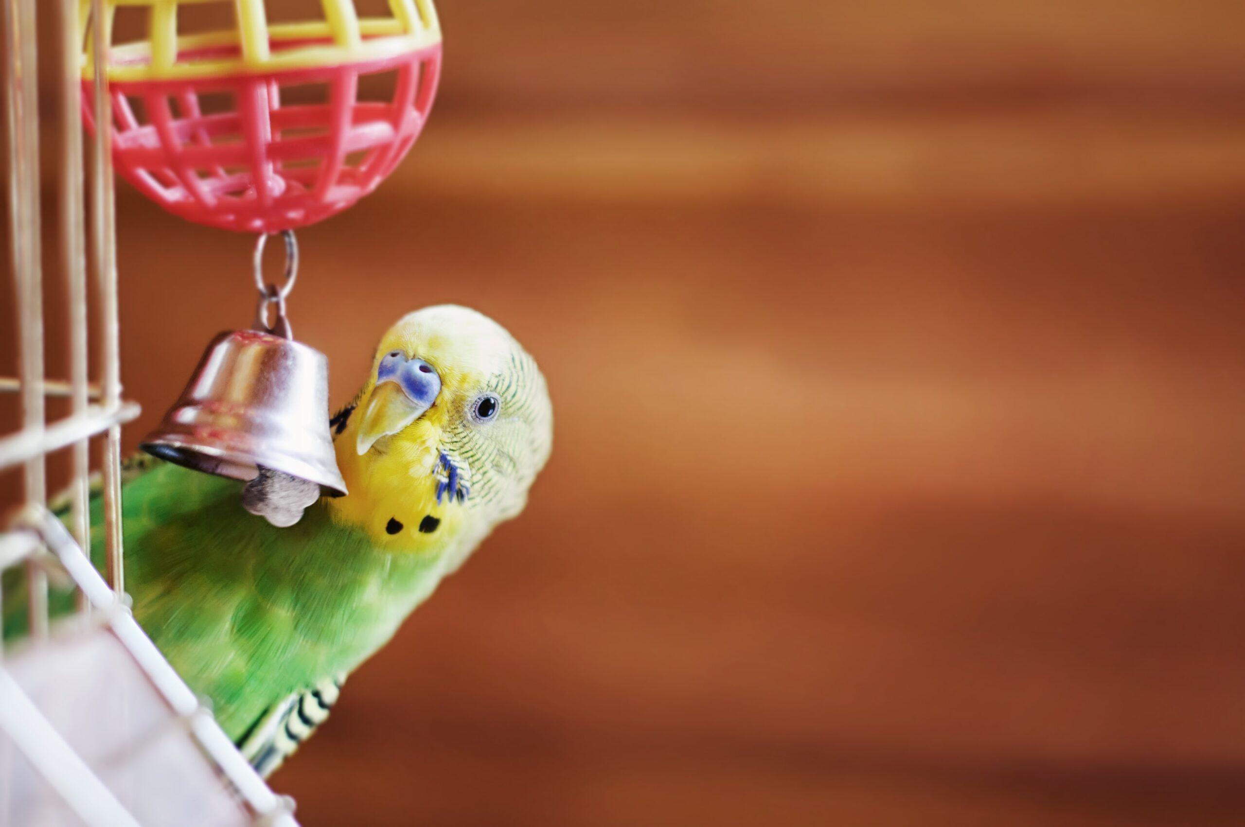 Muhabbet Kuşu Hastalıkları Nelerdir?
