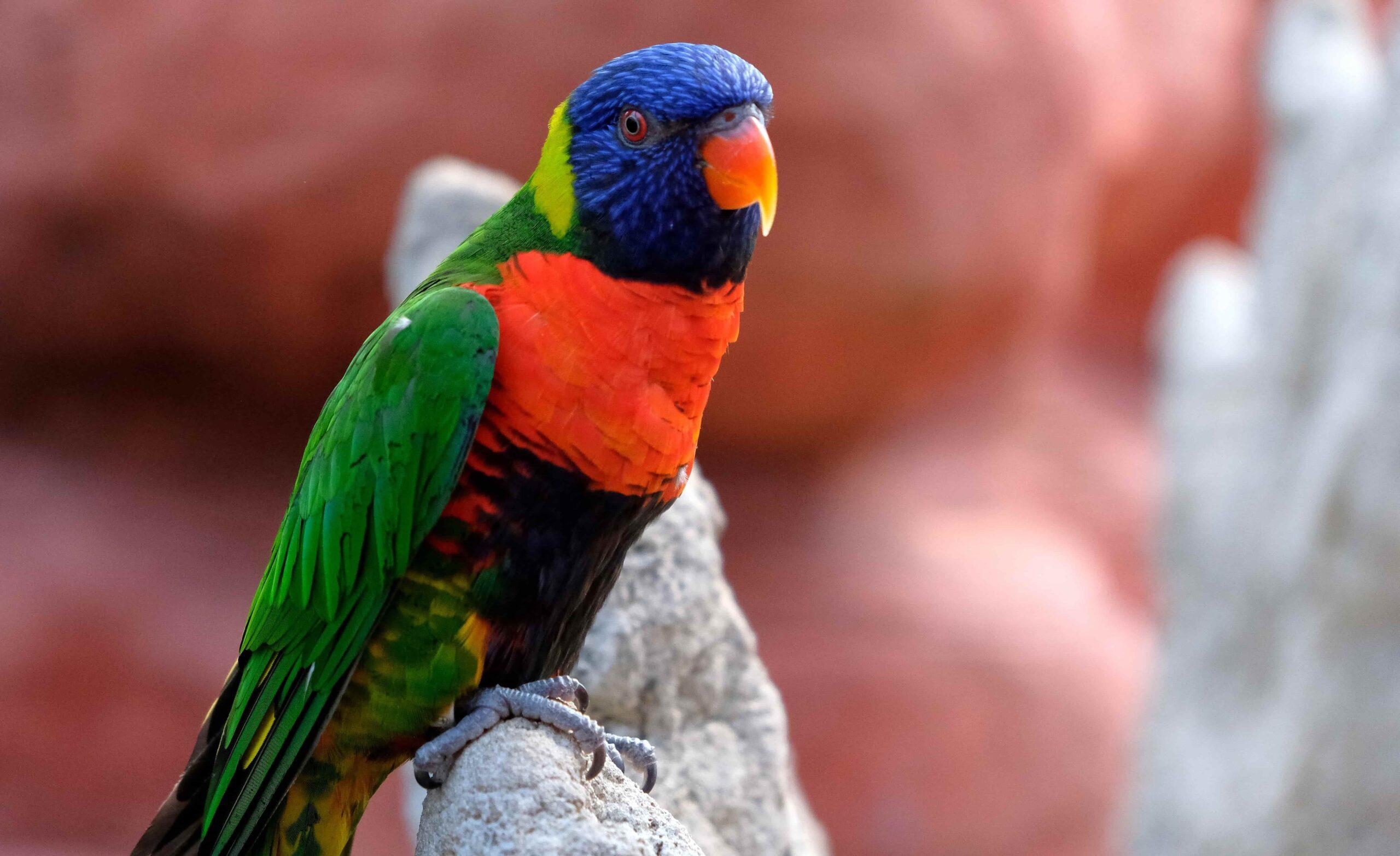 Lori Papağanı ve Türleri