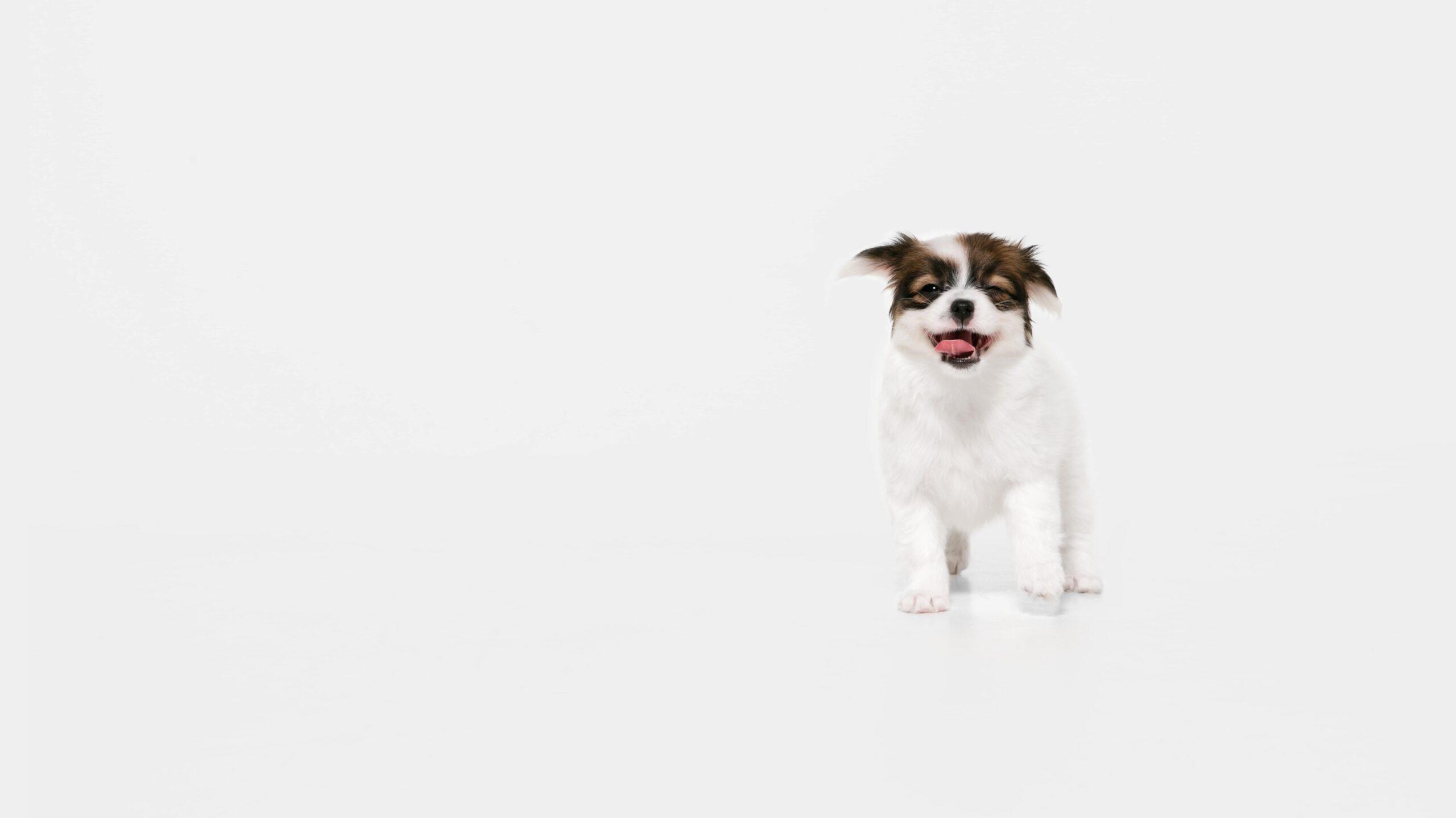 Köpeğe Süt Verilir mi? Köpekler Sütten Rahatsız Olur mu?