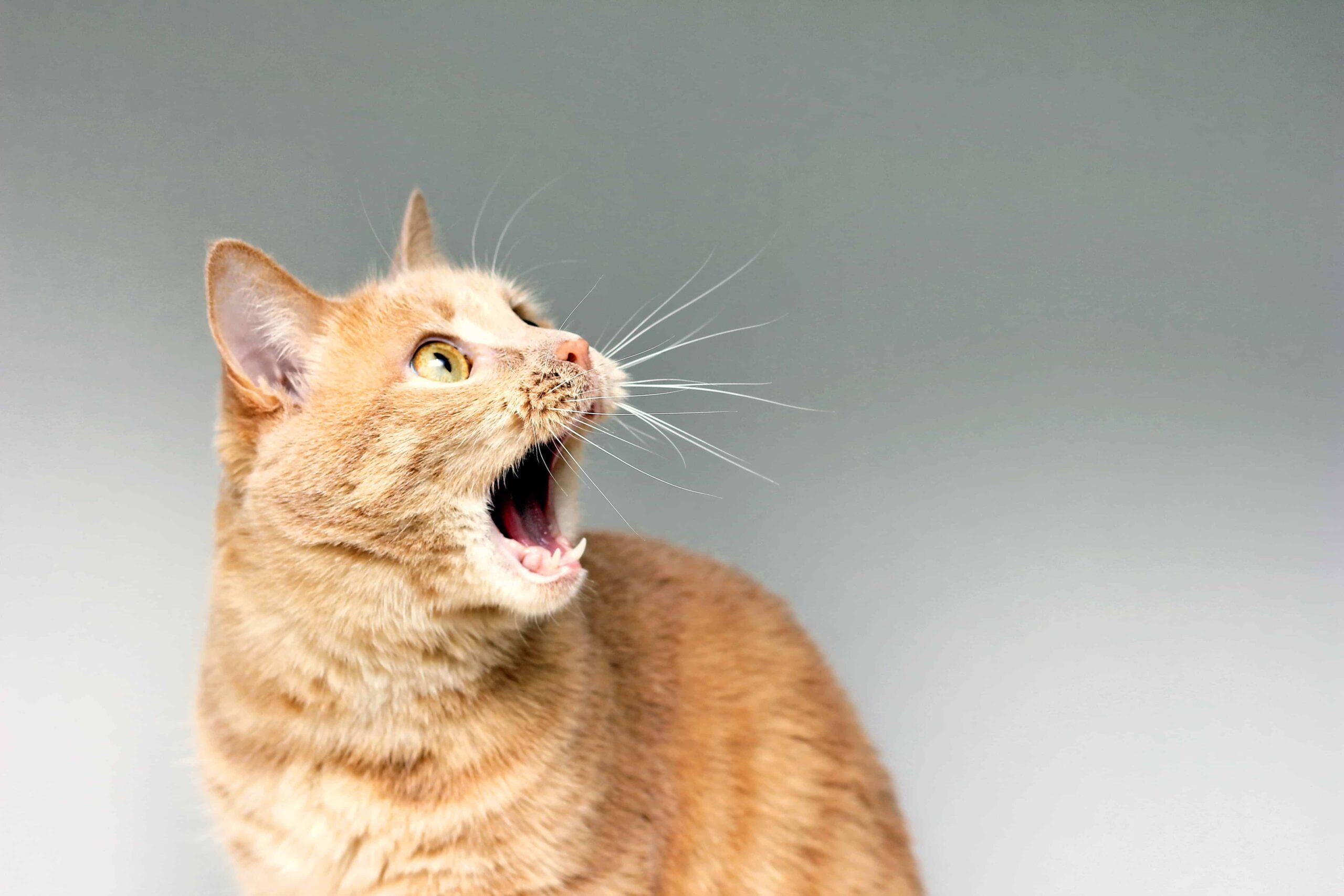 Kedilerin En Çok Korktuğu Şeyler Nelerdir?