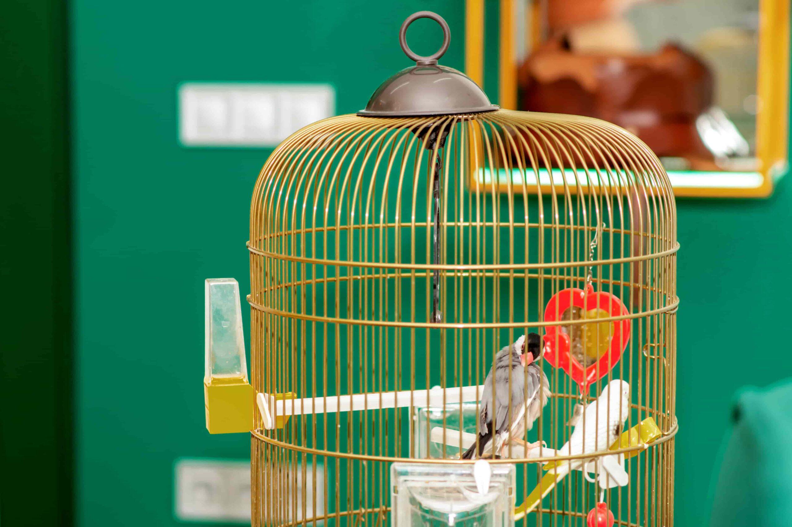 Muhabbet Kuşlarına Zararlı Olan Kafes Oyuncakları Hangileri?