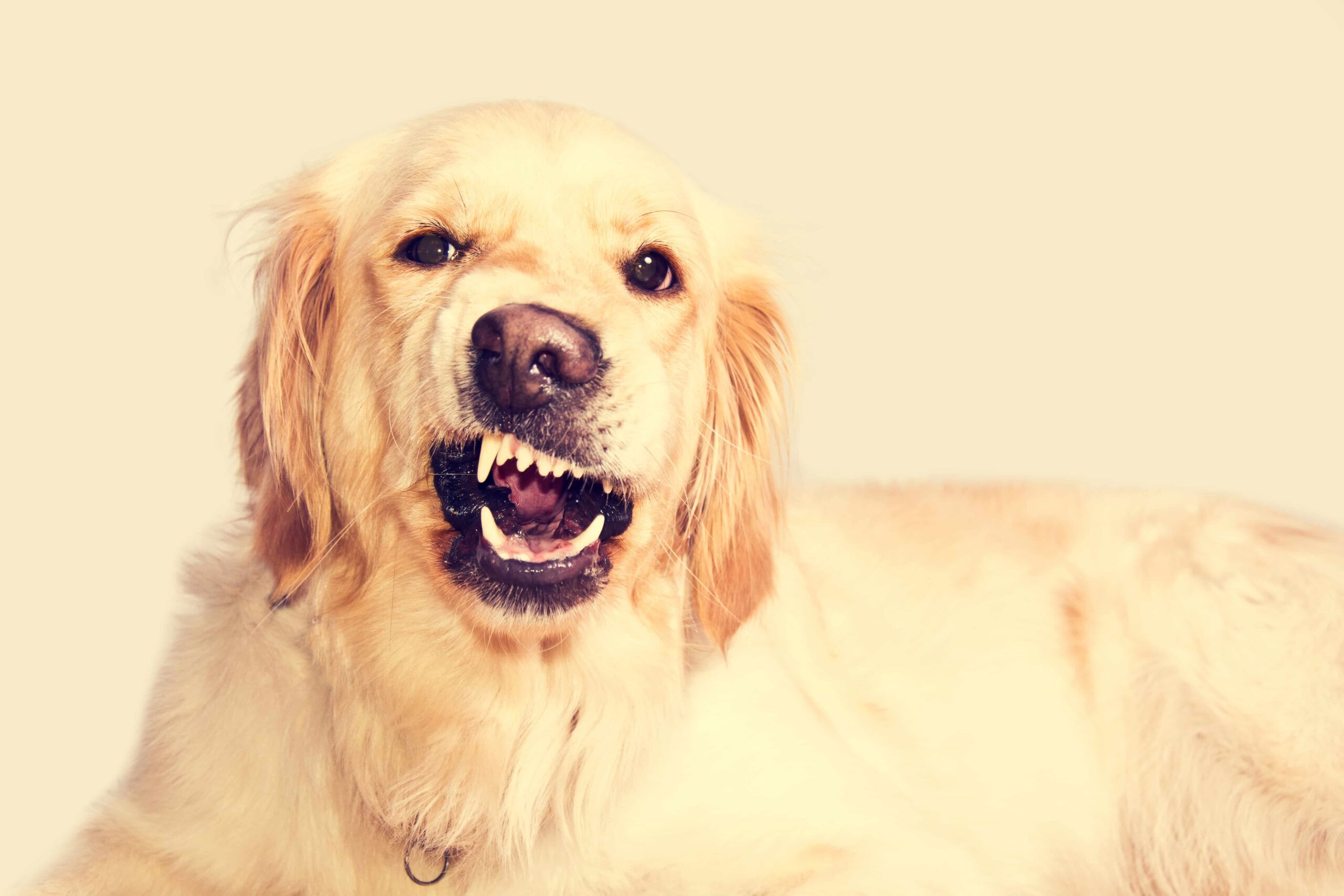 Köpeğim Sürekli Havlıyor, Neden Olabilir?