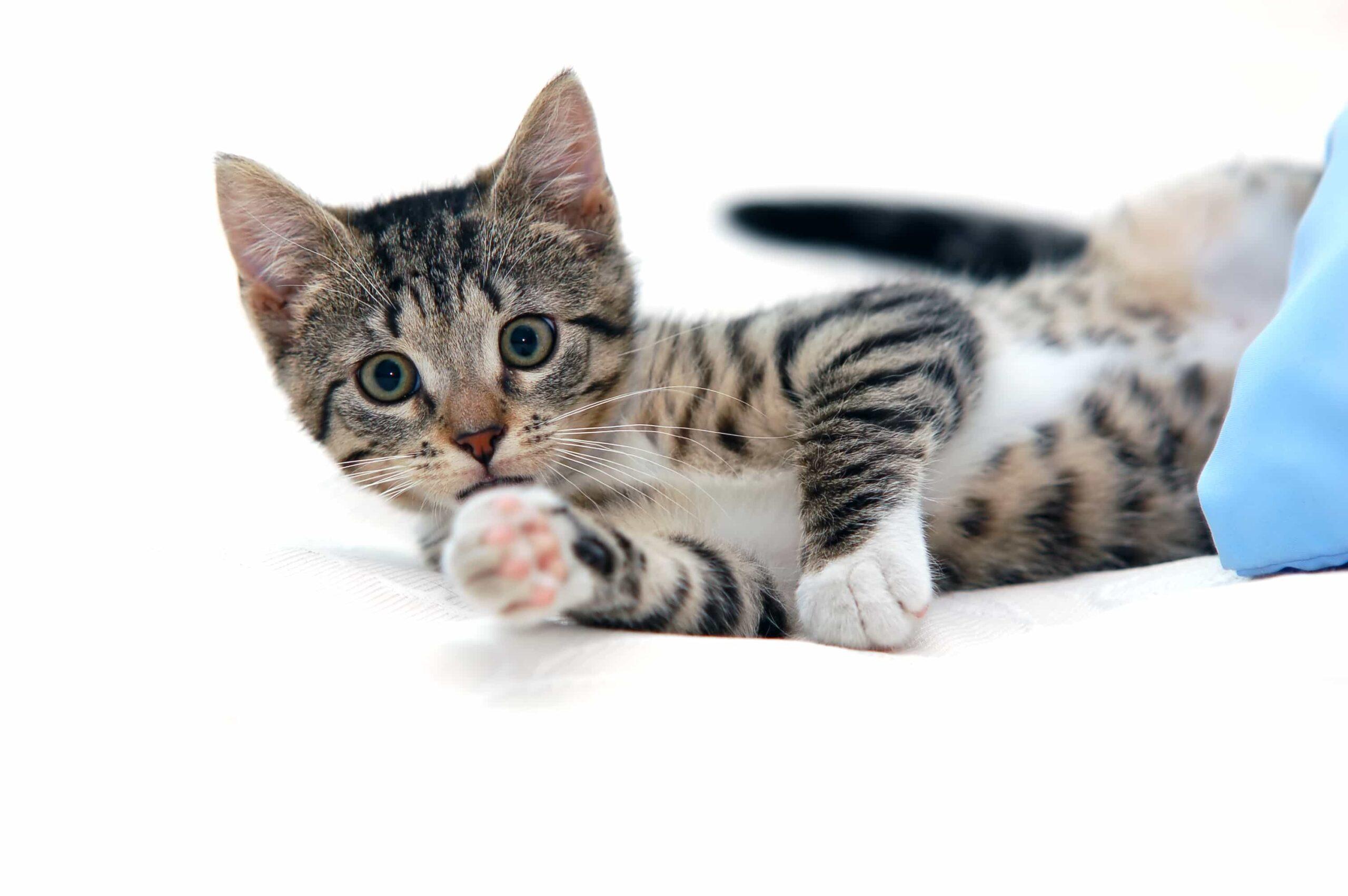 Kedim Sürekli Kaşınıyor, Çözümü Nedir?