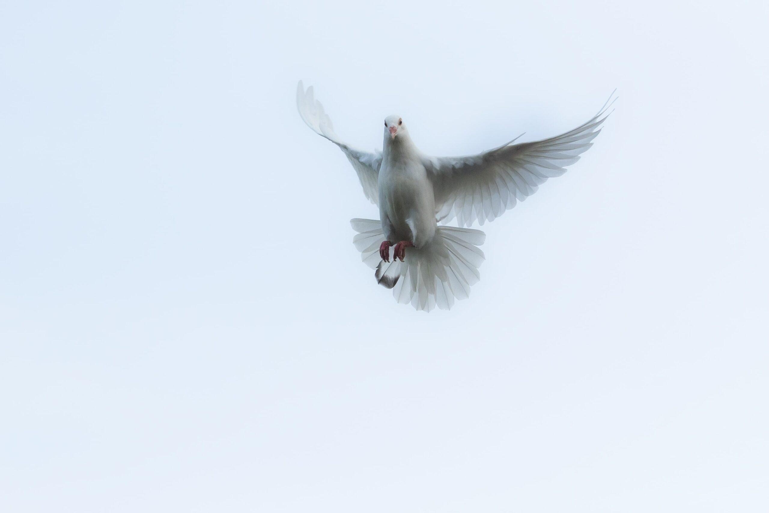 Güvercin Hastalıkları ve Tedavi Yöntemleri