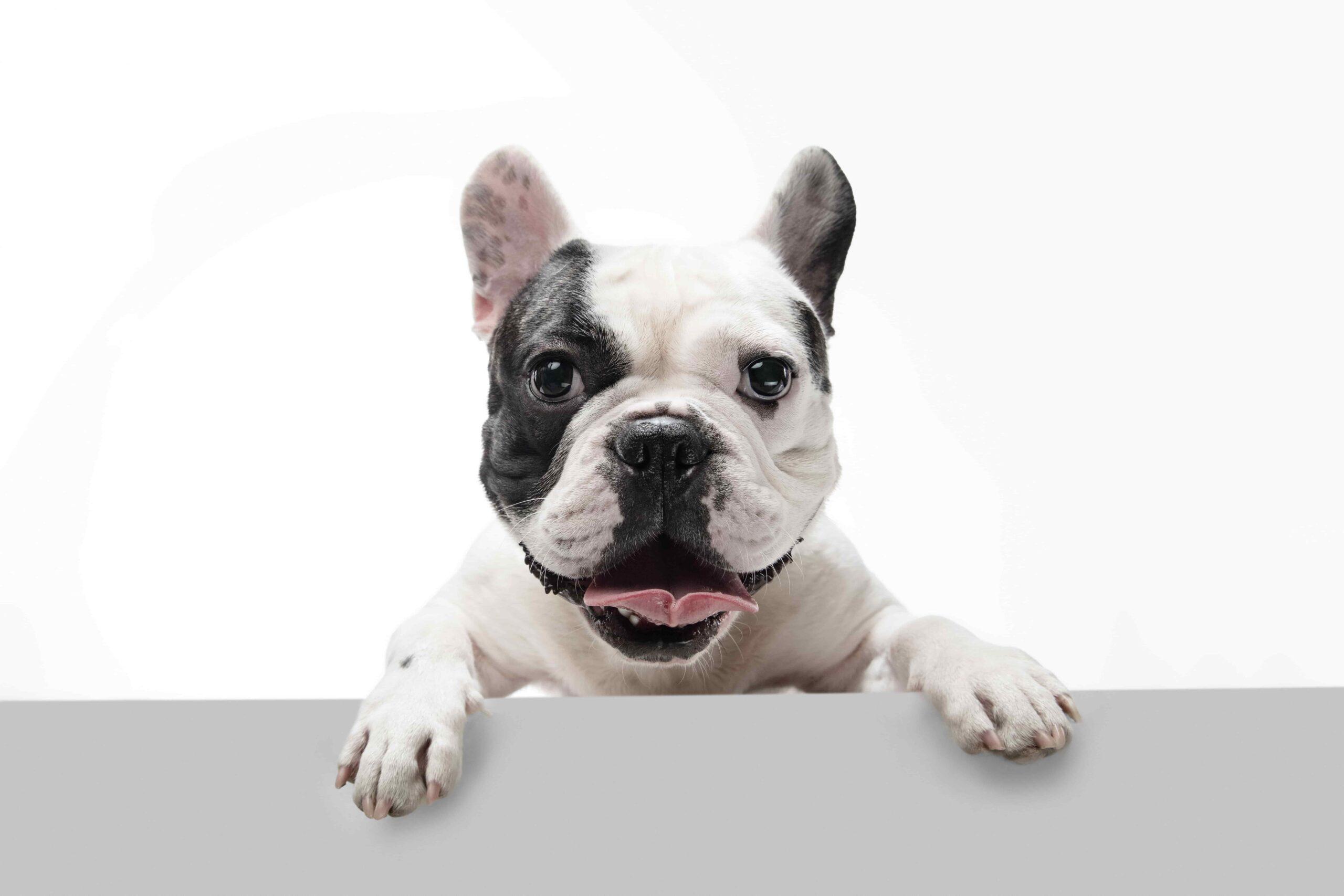 Köpeğim İdrar Kaçırıyor, Neden Olabilir?