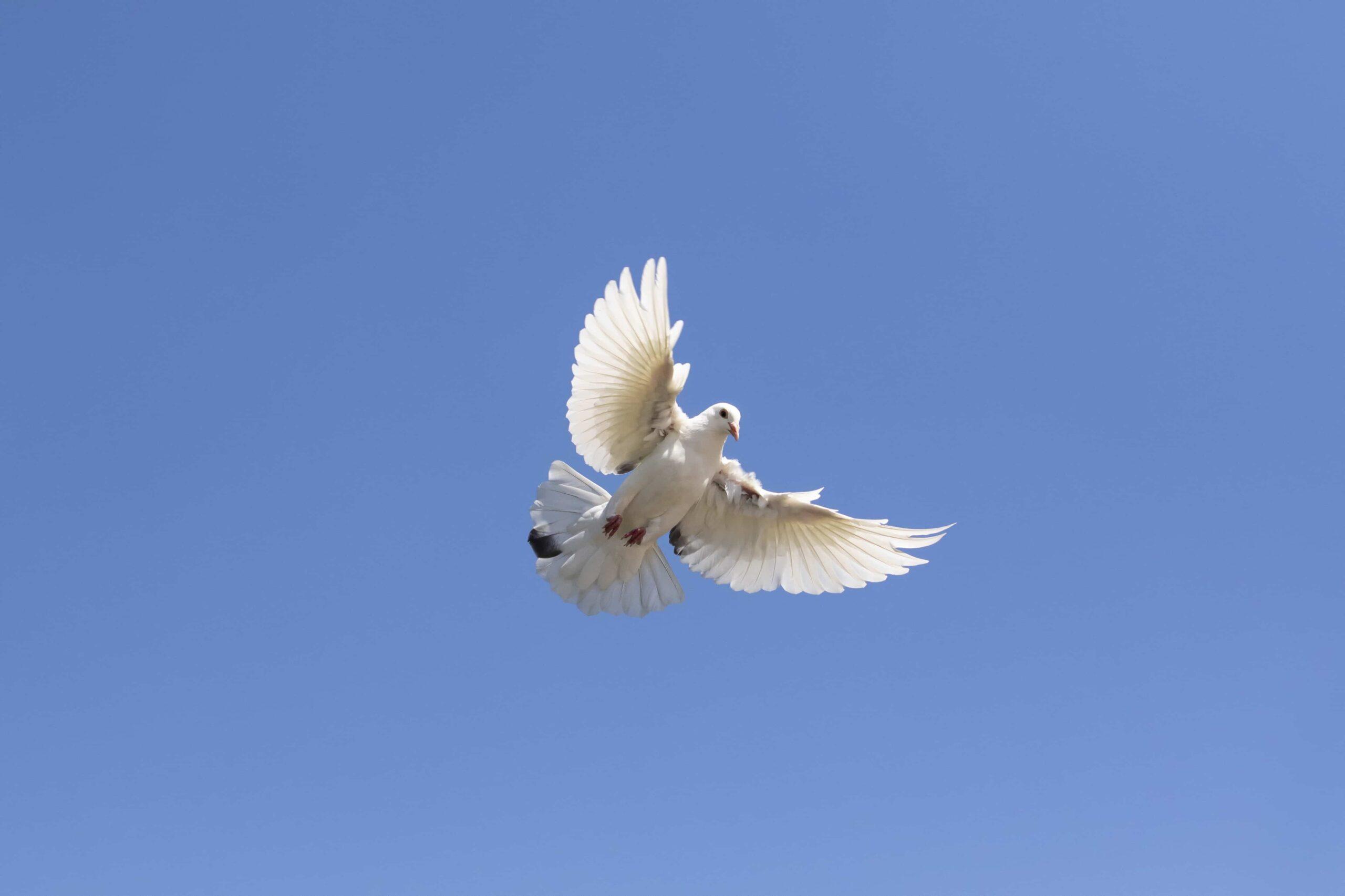 Yavru Güvercin Bakımı Hakkında Bilinmesi Gerekenler