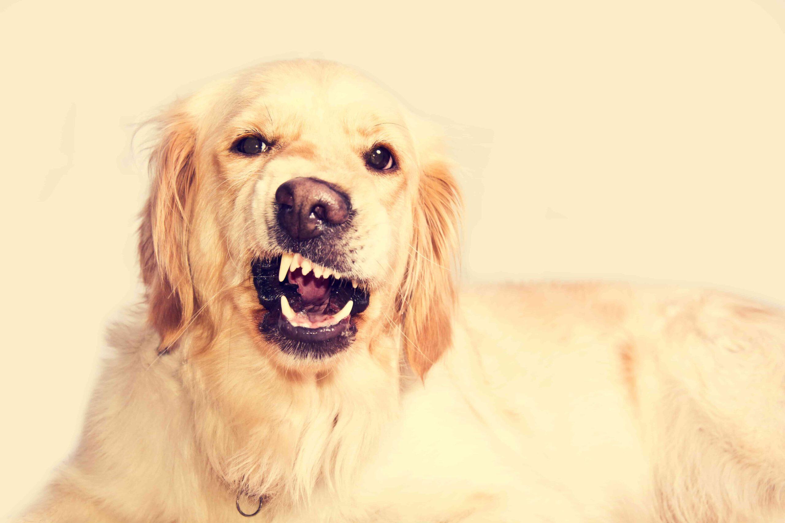 Köpeğim Bana Saldırıyor, Neden Olabilir?